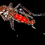 комар - рис